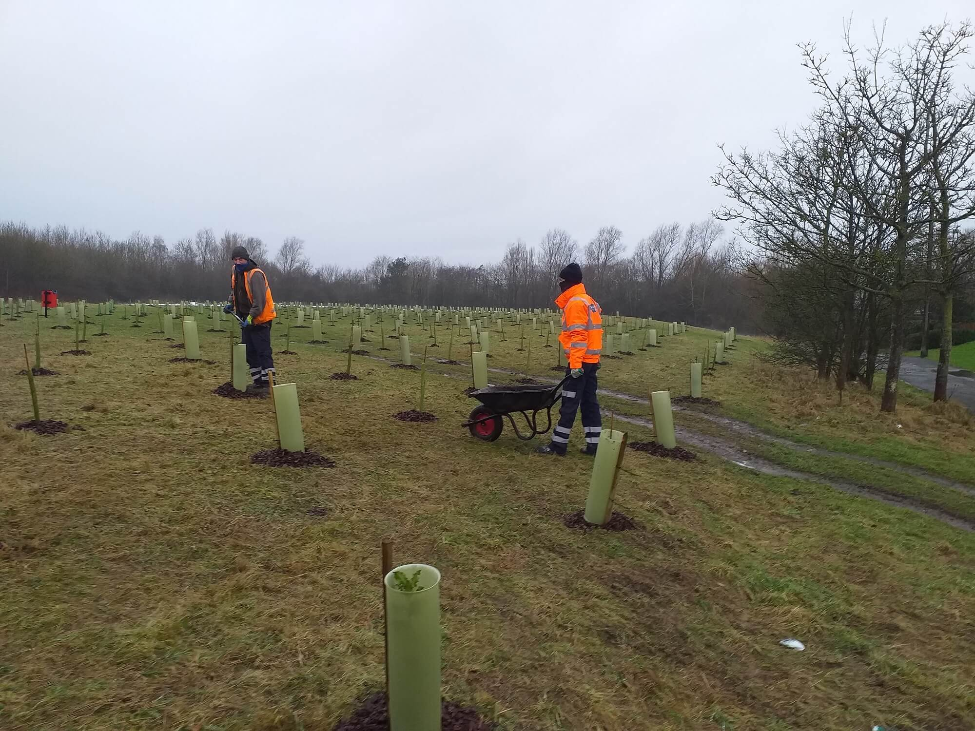 Photo contains 2 council workers planting trees in an open space